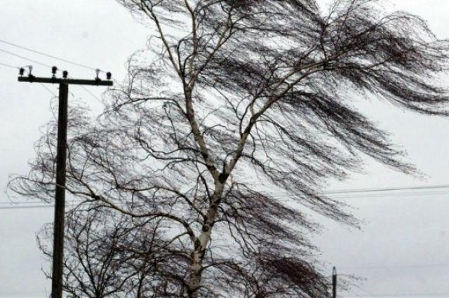Погода на 21 января: в Украине ожидается сильный ветер