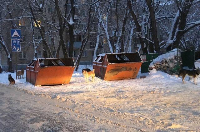 Собаки убежали к мусорным бакам.