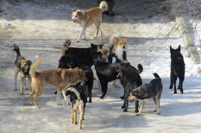 По подсчетам в своре было от 12 до 15 животных