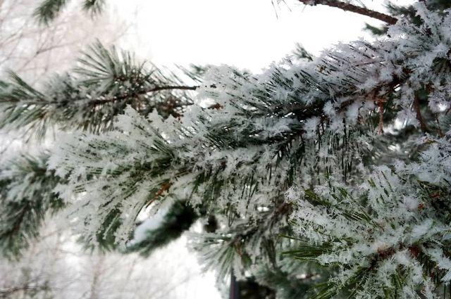 Ночью в городе выпали незначительные осадки, а днем пройдет небольшой снег.