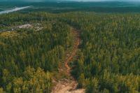 Общий фонд восстановления лесов составляет 11,6 млн гектар