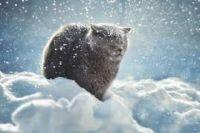 В Киев метеорологическая зима еще не пришла: подробности
