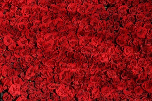 9,5 тысяч роз проверили сотрудники тюменского Россельхознадзора