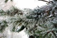 Кроме этого в регион придёт похолодание. Циклон пройдёт 25 января. Ожидается понижение температуры до -25…-30°.