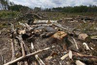 Во Львовской области чиновников подозревают в незаконной вырубке леса