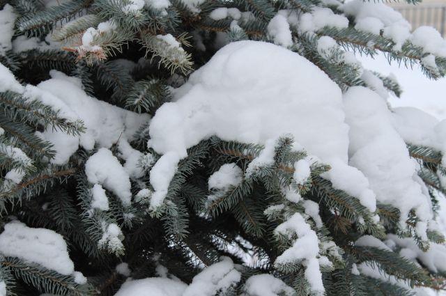 В начале недели возможны снегопады.