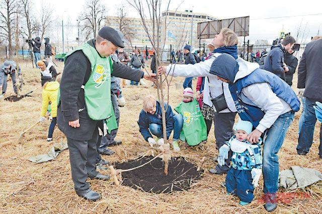 Заявки навысадку именных деревьев осенью 2020 г. принимаются по31 июля 2020 г.