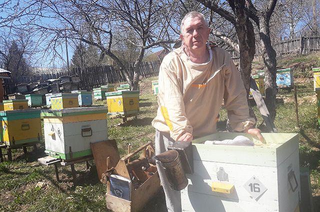 Александр Соколов уверен, что пчёл надо любить так же, как членов семьи.