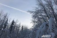 Тюменская область направит 364 млн рублей на сохранение лесов
