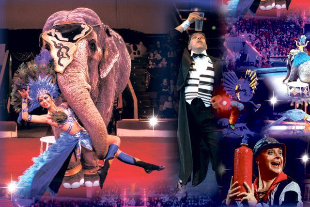 Каждый любит в цирке что-то своё. Одни – животных, другие – фокусы, третьи – посмеяться над проделками клоунов.