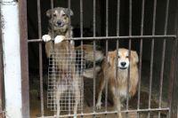 Если владелец не может содержать свою собаку, лучше сдать её в муниципальный приют, расположенный по адресу улица Соликамская, 271.