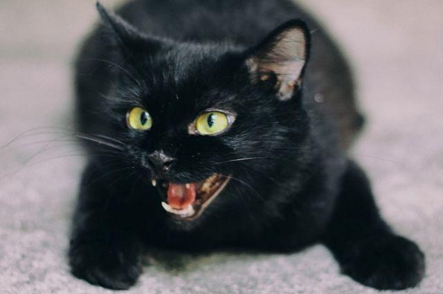 В Ижевске спасли котенка, провалившегося в шахту лифта