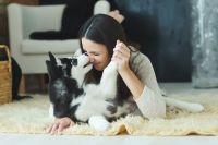 Победители получат миски, игрушки и лакомства от новосибирского зоомагазина «Сытый кот».