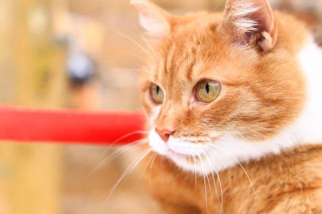 Кота называют по-разному: Петроглиф, Петя, Пётр Михайлович.