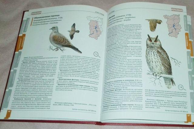 Юных оренбуржцев просят нарисовать животных из Красной книги.