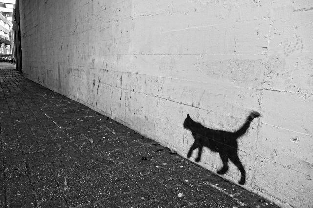 В Калининграде выделят места для граффити