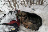 По словам женщины, пес побит и нуждается в ветеринарной помощи.