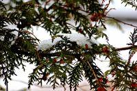 Резкие перепады погоды влияют на метеозвисимых людей.