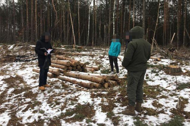 В Житомирской области ГБР обыскивает лесничества