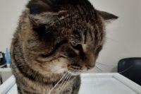 Волонтеры спасли кота Барсика и после лечения будут искать ему любящих хозяев.