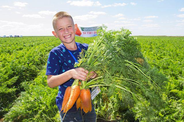 Порядка миллиона тонн овощей выращивают ежегодно волгоградские аграрии.