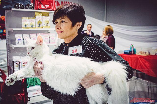 На выставке представили разные породы кошек - мейн-кунов, британских, бенгальских котов и т.д.