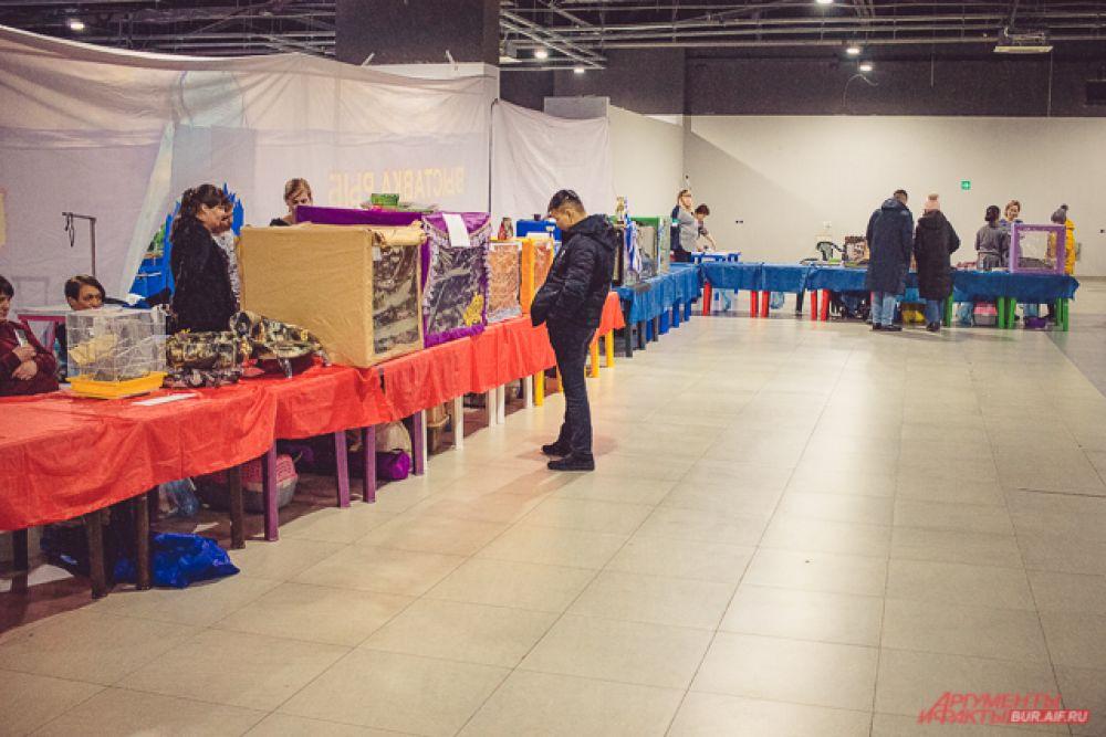 Пятнадцатая международная выставка кошек прошла 8 февраля в одном из торговых центров Улан-Удэ