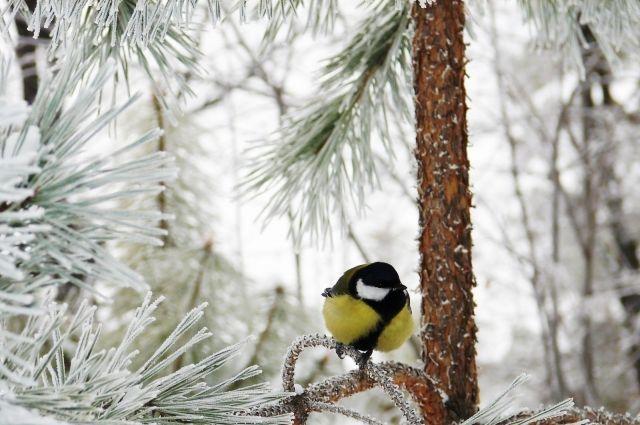 Погода на 13 февраля: в Украине продолжается потепление