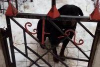 В Харьковской области пес насмерть загрыз ребенка
