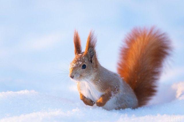 Погода на 14 февраля: в Украине продолжается теплая зима