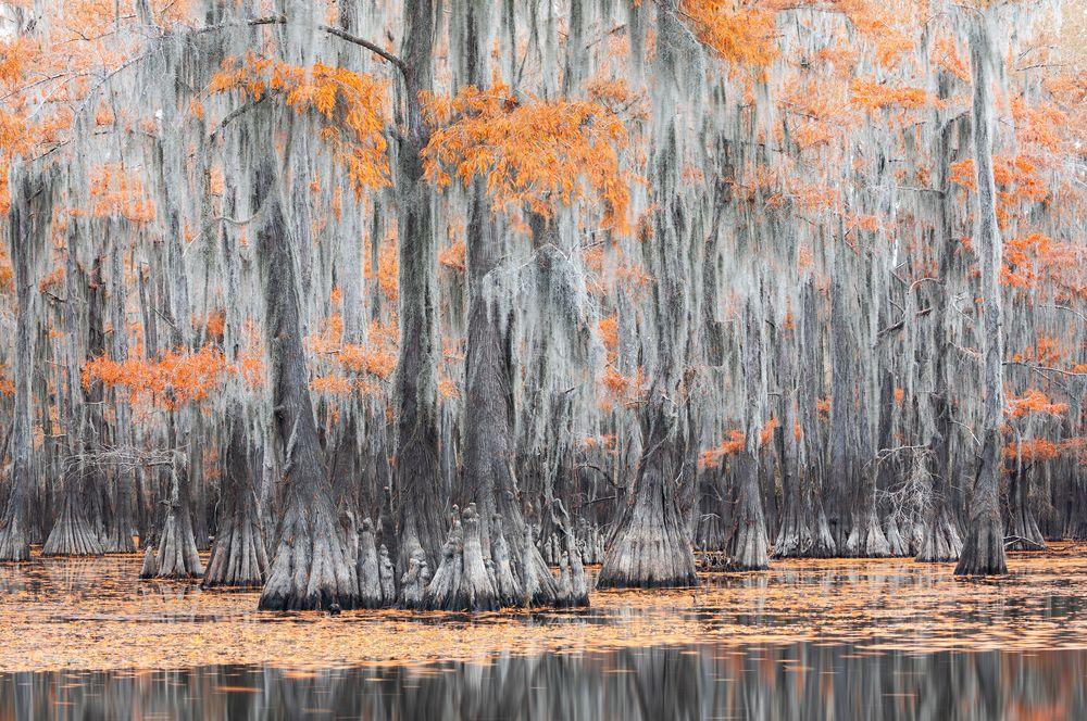 Деревья, покрытые испанским мхом, в болотах Техаса.