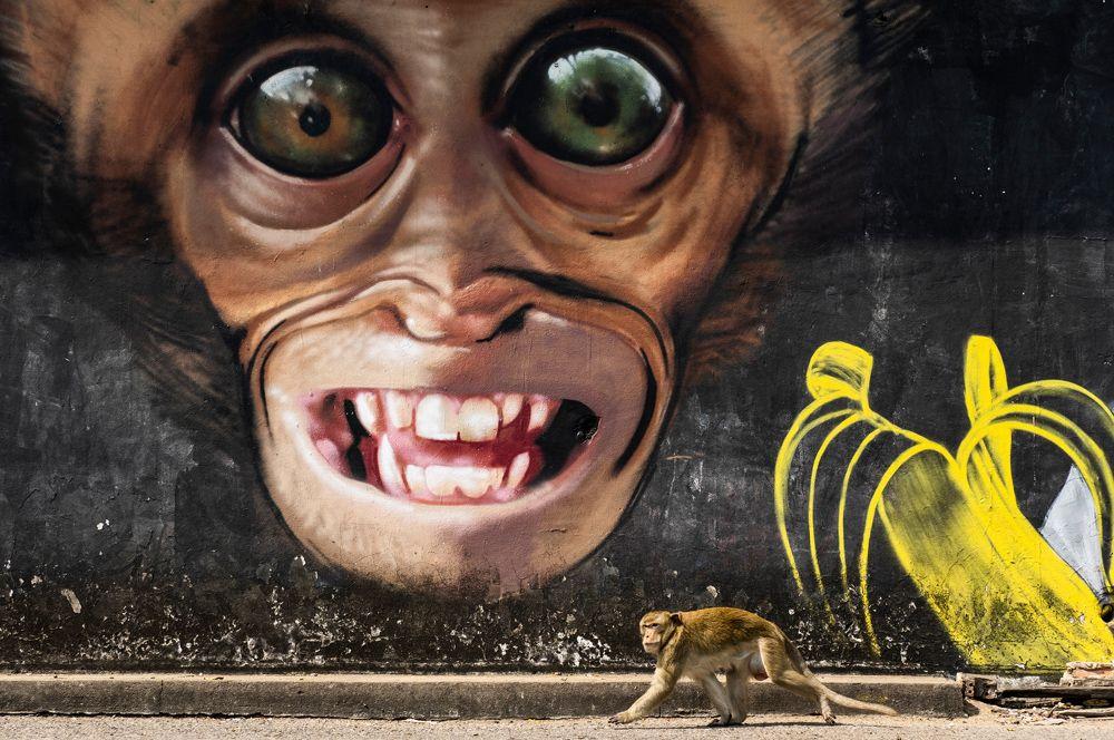 Макака перед граффити обезьяны в городе Лопбури в Таиланде. Местные жители почитают макак, поэтому в городе их очень много.