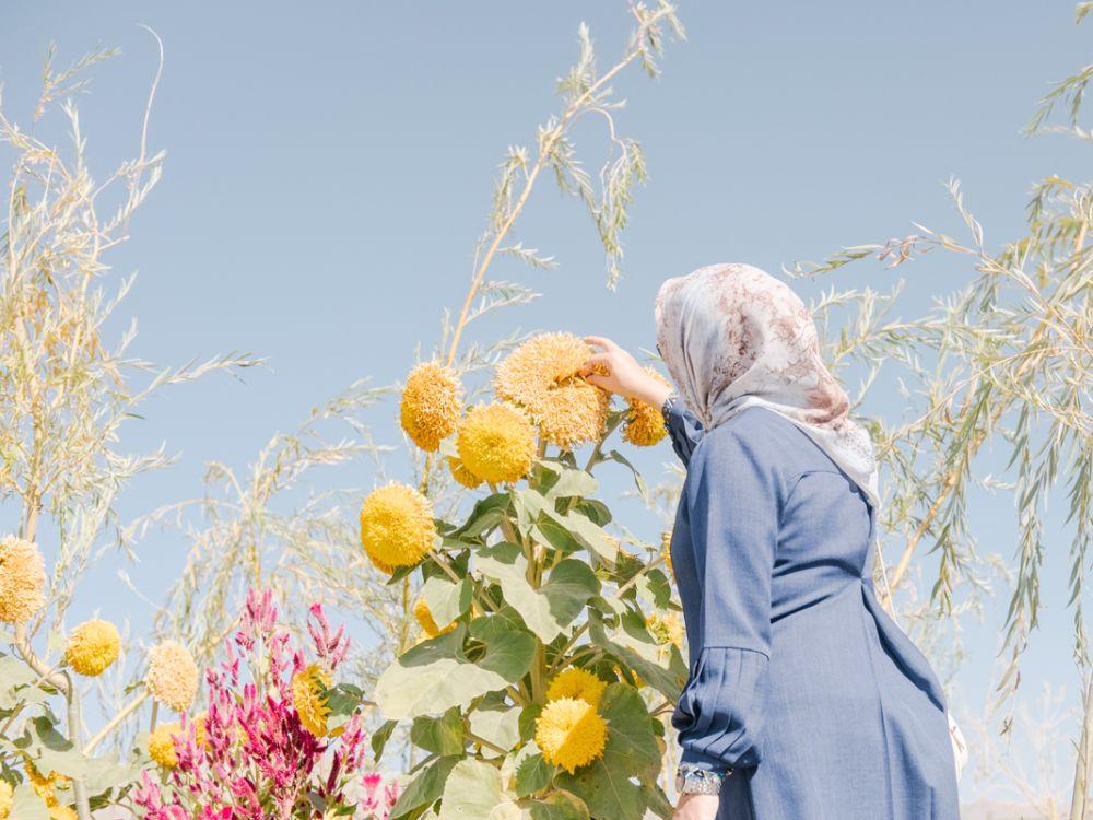 На озере Урмия в Иране происходит экологическая катастрофа. Озеро высохло, и соль, переносимая по ветру, покрывает близлежащие поля, вызывая высыхание сельскохозяйственных культур.
