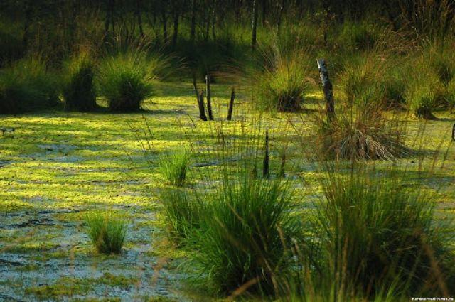 В Житомирской области в болоте утонула женщина
