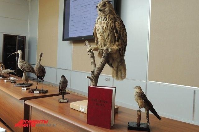 В Оренбурге презентовали обновленную Красную книгу региона.