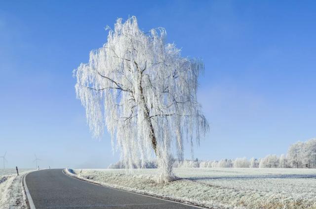 В Оренбуржье ожидается снежная и ветренная погода.