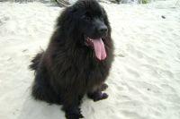 Собака застряла на острове в Оби и не могла доплыть до берега.