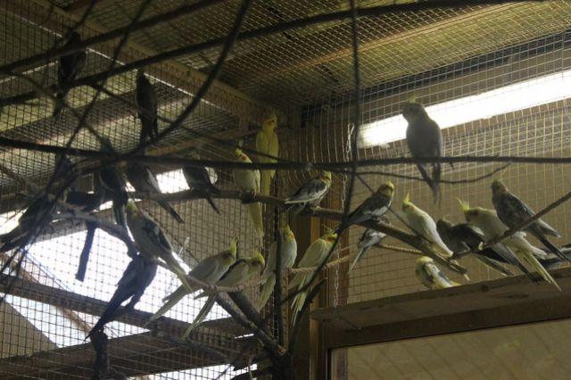 Из-за аномально теплой зимы у попугаев зоопарка сбились биоритмы