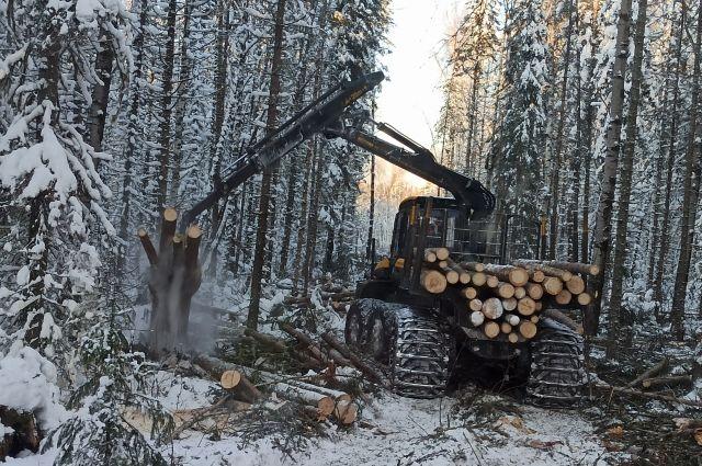 Современный лесоповал – высокотехнологичное производство.