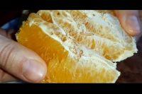 Тюменка возмутилась, купив в магазине апельсины с личинками мухи
