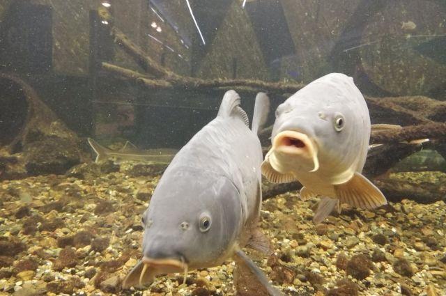 При «Наутилусе» работает школа аквариумистов.