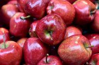 В Тюмени уничтожили 700 кг яблок из Польши