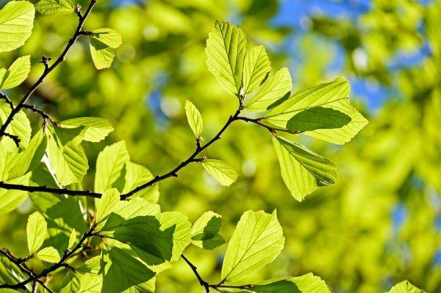 В Тюмени продолжатся работы по озеленению