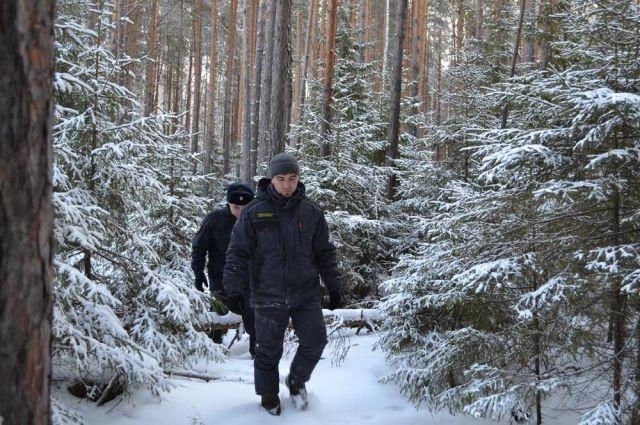 В Тобольске откроют новый лесопарк