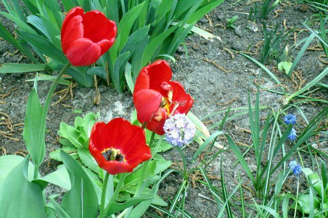 В Тюмени ожидается ранняя весна