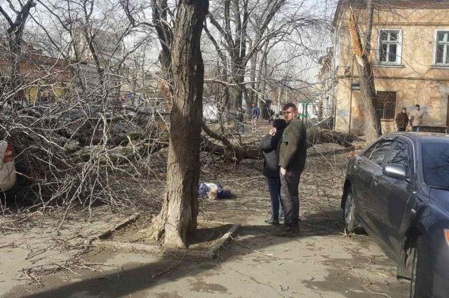 В центре Одессы дерево раздавило женщину