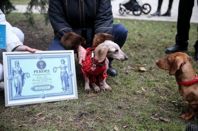 В Киеве умерла самая старая собака Украины