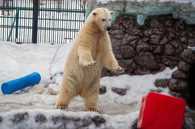 В парке «Роев ручей» будут ждать от Авроры маленких белых медвежат.