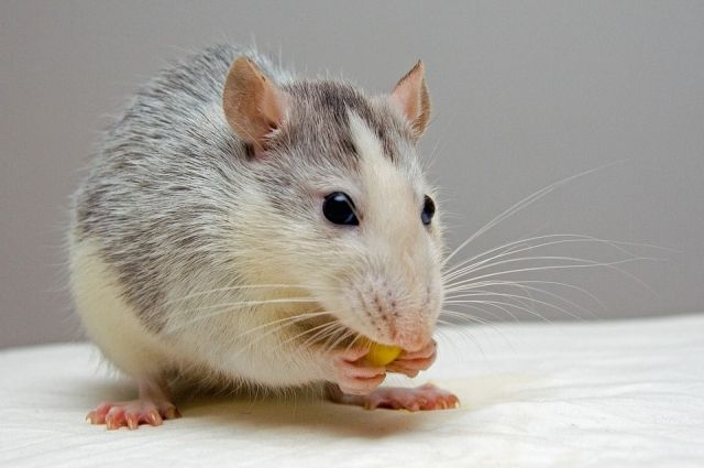 В кафе Салехарда нашли просрочку и крысиный яд