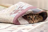 Коронавирус могут передать домашние животные: детали